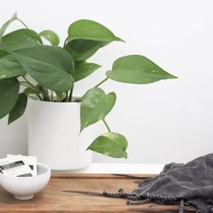 Devils Ivy in Zakkia Cylinder Pot White Houses, Indoor Plants, Ivy, Greenery, Plant Leaves, Blog, White Homes, Inside Plants, Blogging