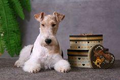 Przysmaki dla psów: http://www.kakadu.pl/Przysmaki-i-suplementy-dla-psow/przysmaki-dla-psow.html