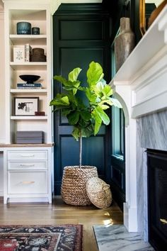 The Fiddle Leaf Fig is a versatile go-to decorating accessory but it can be temperamental. Should I go for a real one or head straight for the faux option?