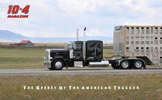 flat-top Peterbilt, one nice cow truck!
