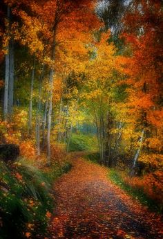 TWO roads diverged in a yellow wood, And sorry I could not travel both... I took the one less traveled by, And that has made all the difference.