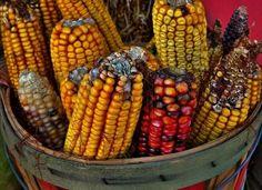 France Won�t Ban Monsanto�s GMO Corn #monsanto #gmo #geneticallymodified