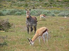 wildlife in the park Volunteer Abroad, Mountain Hiking, Bird Species, Cape Town, West Coast, Mammals, Kayaking, South Africa, Giraffe