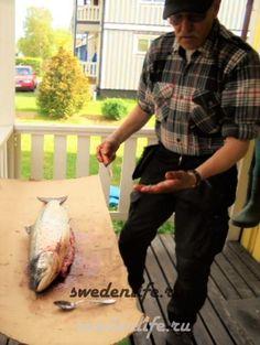 Суп из лосося - вот так мы разделываем рыбину лосося