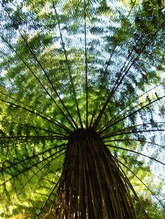 New Zealand Northern Island, Kiwiana, Pretty Green, Tree Art, Natural World, Homeland, Ferns, New Zealand, Beautiful Places