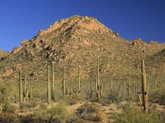 Cactus, ponderosa pines, aspens and fir trees are all to be found at Saguaro National Park. The 92,000-acre park ranges between 2,300 feet on the west side of the part to 8,482 feet at the summit of Rincon Peak on the east side. Thanks to such an extreme elevation, Saguaro National Park is home to more than 1,700 species of plants and animals, making it one of the most biologically diverse parks in the country.