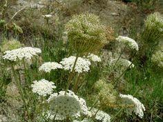 Herbalism, Plants, Vegetable Garden, Herbal Medicine, Plant, Planets