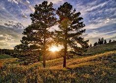 Drzewa, Wschód, Słońca