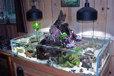 The Volcano Tank - Konolua - Reef Central Online Community