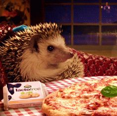 That goes for you too, hedgehog. | 17 Animals Who Are Eating The Wrong Thing