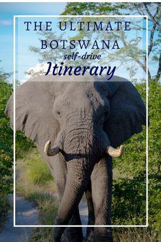 The ultimate Botswana self-drive itinerary (3-4 weeks) - Botswana, Self-Drive Safari, Game drive, Mokoro trip, Lodge, Camp - Maun, Kasane, Limpopo River, Nxai pans, Chobe, Savuti, Moremi, Okavango Delta, Khwai, Victoria Falls