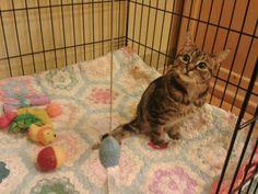 Dot was born with spina bifida.