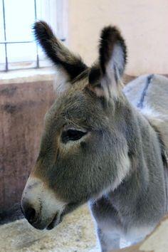 Every farm needs a donkey