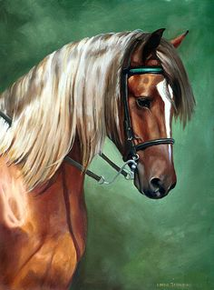 Rocky Mountain Horse - love the flaxen mane & tail