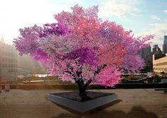 Baum mit 40 Steinfruchtarten