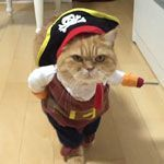 Pirate Cat!