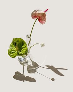 Anthurium still life Shadow Photography, Still Life Photography, Still Life Photos, Plantar, Light And Shadow, Ikebana, Art Direction, Vases, Flower Power