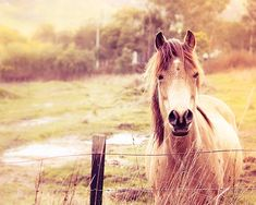 Horse photography equine pony photography fine by mylittlepixels,