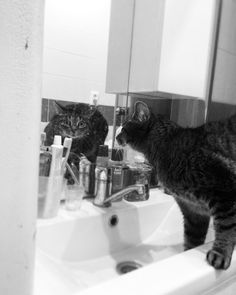 Look at me.  #cat #blackandwhitephotography #blackandwhite #photography #pet