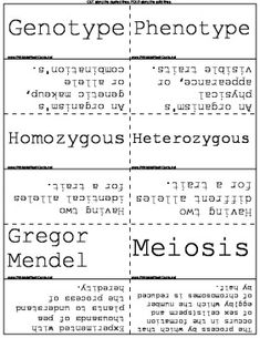 Biology students can use these science flash cards to study hereditary traits Free to download and print
