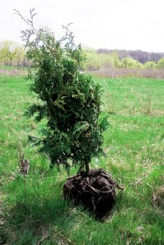 Tree Planting Tips: How And When To Plant Trees