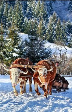 Ucrania rural
