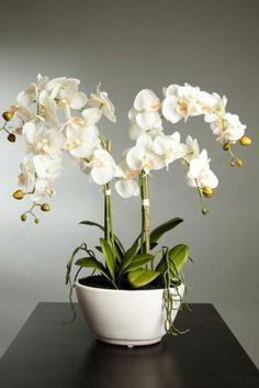 100 pcs/bag orchid seeds, bonsai Butterfly phalaenopsis orchid flower seeds, balcony plant for home garden indoor pot Orchids Garden, Home Garden Plants, House Plants, Orchid Flower Arrangements, Orchid Centerpieces, Orchid Pot, Orchid Plants, Flowers Perennials, Planting Flowers