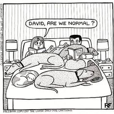 With all the pets we have had this is a question we often asked ourselves...espcially when we had 4 big dogs and 5 cats.