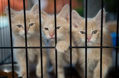 Revised Bay City animal ordinance won't limit the number of pet cats   #mlive   #baycity #michigan #animals #pets #cats #laws #ordinances #localgov