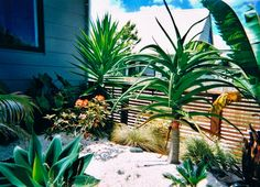 a tropical landscape struggling in the cold in new zealand   www.cpricelandscapes.com Tropical Landscaping, Landscape Photos, New Zealand, Craft Ideas, Cold, Plants, Landscape Pictures, Diy Ideas, Planters