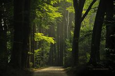 FOREST PHOTOGRAPHY BY NELLEKE PIETERS