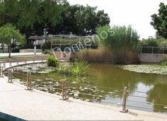 Digital Picture/Photo/Wallpaper/Desktop/Background Pond in the park, Israel #4 #Realism