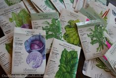Planting a Fall Vegetable Garden – Time to Start Your Seeds