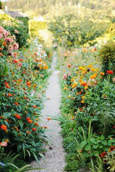 Path; Flower-lined path.