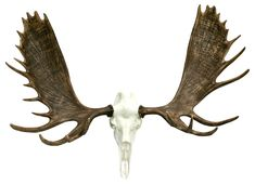 """The European Alaskan Moose Mount is 60"""" wide and has an overall height of 52"""" tall. Each mount requires assembly and includes all mounting hardware."""