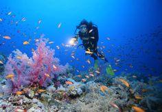 Plonger en Egypte peut permettre d'offrir des sensations uniques aux personnes en recherche de jolis paysages.