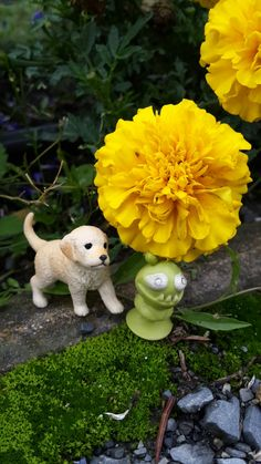 The Little Alien gets close to the lovely flower !