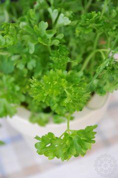 Persilja yrttiruukussa, väri lämmin hiekka, Puksipuu Shop #parsley #herbs #pot #kitchen