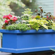 Fix Your Container Gardening Mistakes