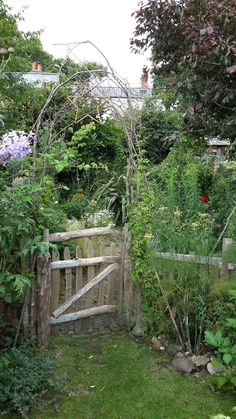My garden,  looking down from the enclosed herb garden/tortoise enclosure