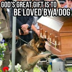 Dogs are one of Gods great gifts