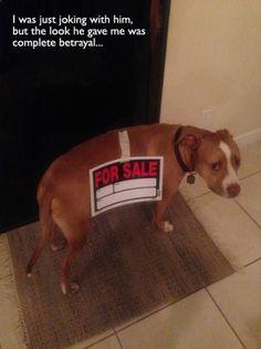 Awwww poor puppy