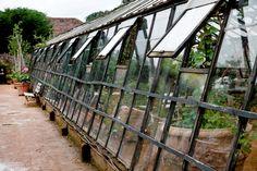 greenhouse / Petersham Nurseries