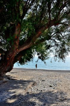 Chios Chios Greece, Greece Islands, Homeland, Greek, The Incredibles, In This Moment, Landscapes, Photography, Travel