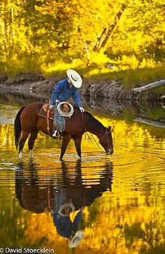 Horse In Golden Pond Drinking Water Reflection.   Repinned by An Angel's Touch, LLC, d/b/a WCF Commercial Green Cleaning Co., Denver's Property Cleaning Specialists! http://angelsgreencleaning.net