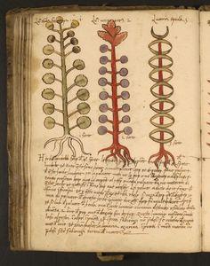 Herbs studies