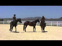 Horses that kick other horses - YouTube