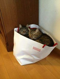 The bag o cats was on clearance.