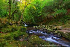 Killarney National Park , Co Kerry, Ireland