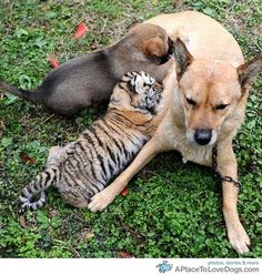 The Cutest Interspecies Animal Friendships
